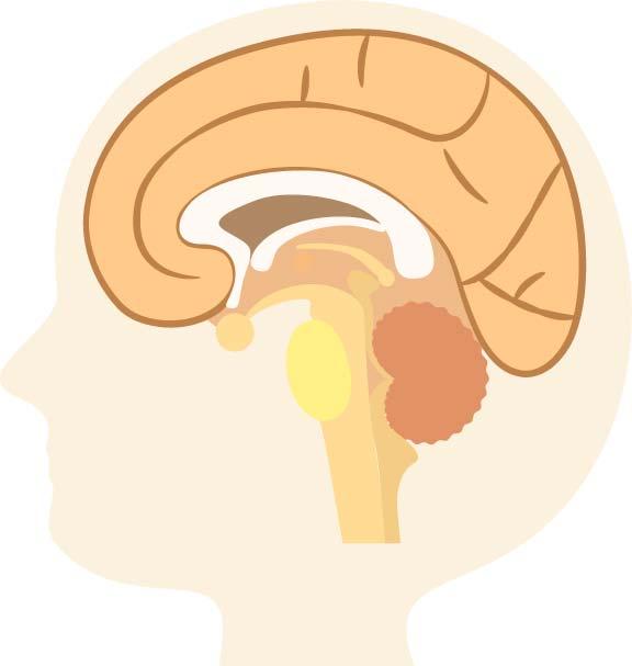 脊髄小脳変性症は運動機能の低下に注意する