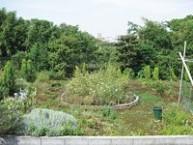 農  園  ホーム農園では、四季折々の植物・野菜を栽培します。