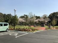 駐車場から桜の木が見えます