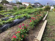 季節の野菜・果物、四季折々の花木
