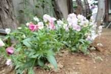 庭には四季折々の花が咲いています
